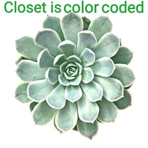 Other - My closest is color coded